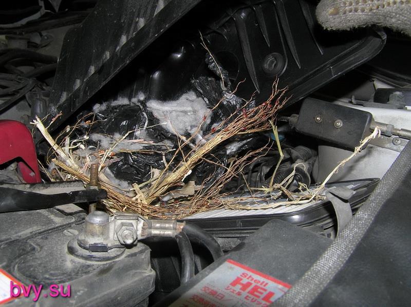 гнездо крысы в корпусе воздушного фильтра