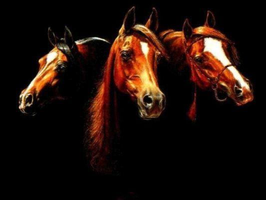 спортивных лошадей(Тракененская,Русская верховая)племенные
